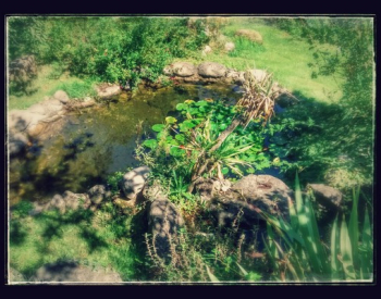 front pond 2-EFFECTS