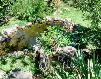 front pond 2
